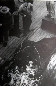 denizden-gunlerce-ceset-toplanmisti-532909