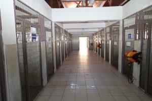 kandıra hayvan barınağı ve rehabilitasyon merkezi (6)